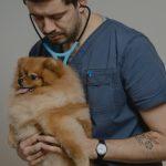 Доктор и собака